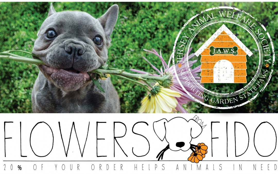 Make Any Day Special… Send Flowers From Fido!